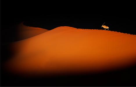 Oryx en el desierto